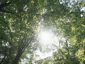 今日のことば 2007.6月 仏の光明は遍く世界を照らし念仏の人を救い捨てることがない(田中具美枝)