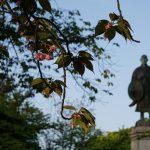 蓮如上人、京都に向けて吉崎御坊をご出立!(5月2日)