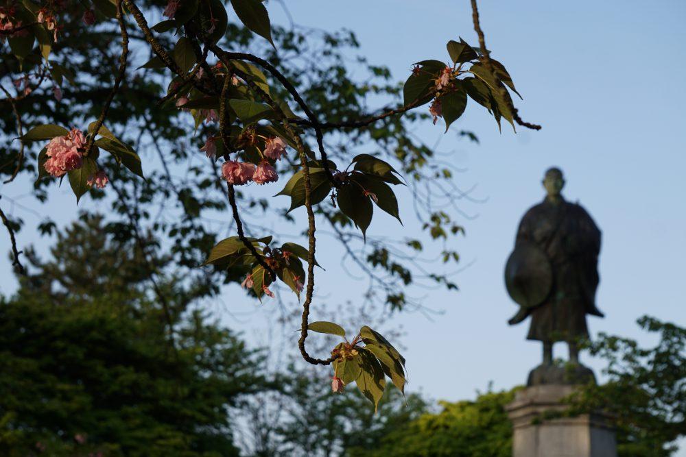 吉崎御坊の5月。蓮如桜と蓮如上人